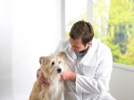 Youngsters can learn about pets and perform pretend animal surgery