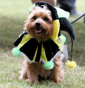 Some pets do well in costumes