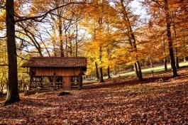 Fall_Park_sheltephoto-1465940617394-6c04e5525665